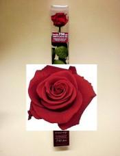 Pravá růže